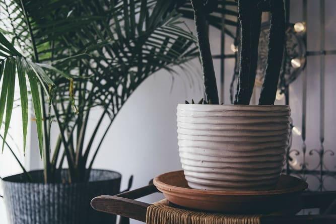 HOME | FLEUR JE INTERIEUR OP MET PLANTEN