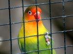 Vogel als huisdier
