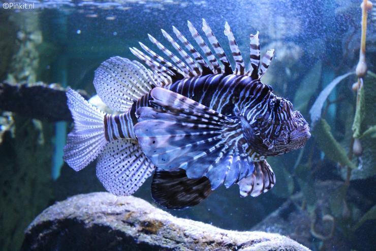 PLOG | SEA LIFE & HEERLIJK WANDELEN